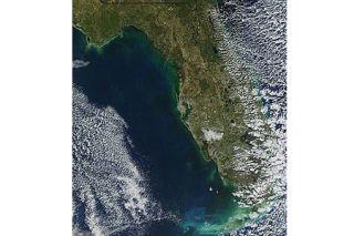 red tide, algal bloom, karenia brevis