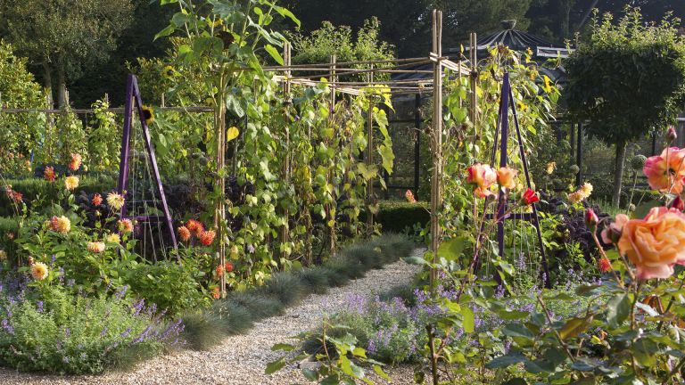 Vegetable garden trellis with a walkway and obelisks