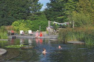 Natural swimming pool in UK garden