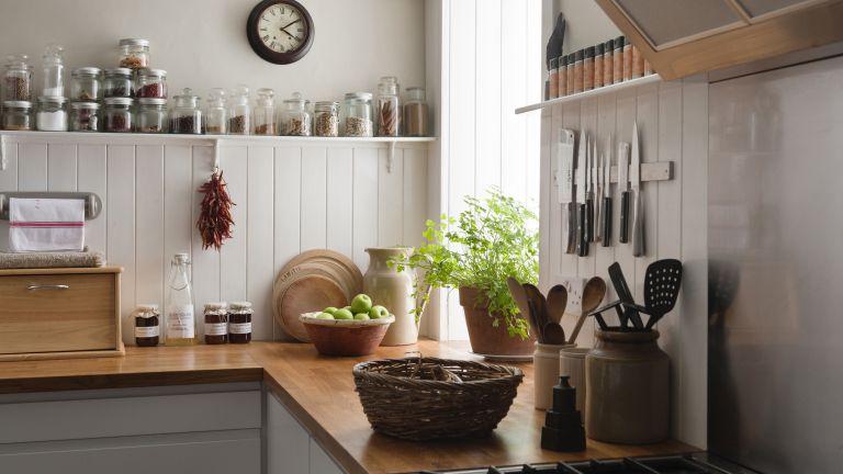 fruit flies kitchen