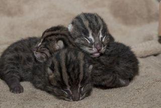 fishing-cats-kittens-110818-02