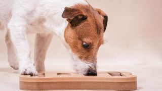 Food enrichment for dogs: 5 ways to make dog food fun