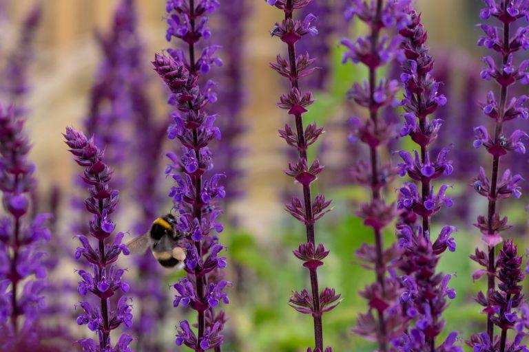 Wyevale Garden Centre stock image