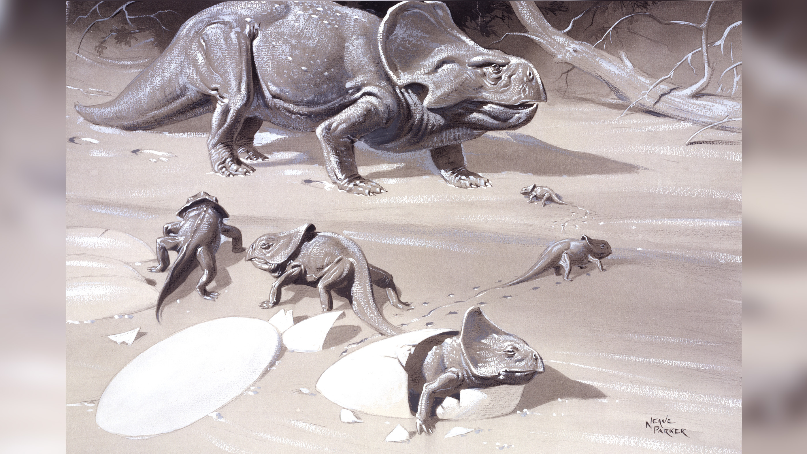 In this artist's concept, an adult Protoceratops is seen with her young.