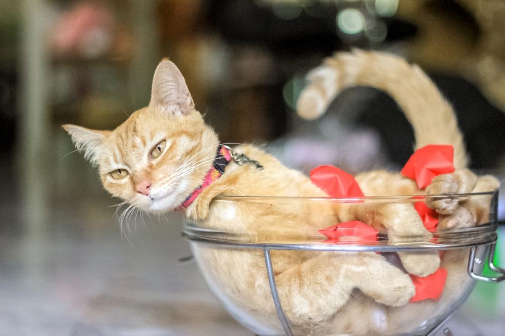 The 2017 Ig Nobel Awards Cats Flow Like Liquids and
