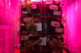 ISS Plants Not Looking Good