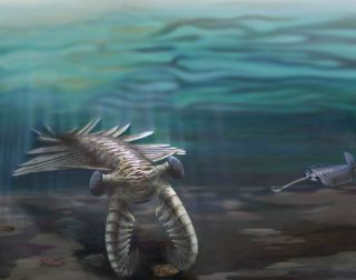 cambrian creatures illustrated