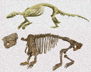 Ernanodon and pangolin skeletons