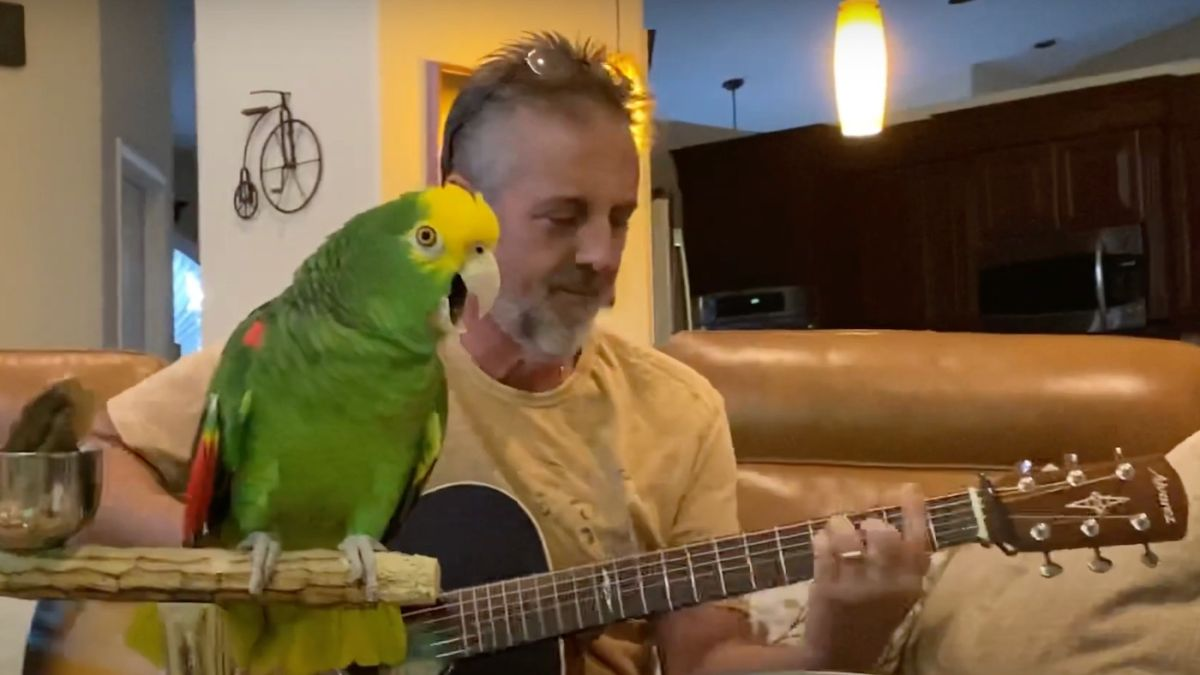 A parrot which sings Led Zeppelin, Guns N' Roses and Beatles songs could be music's next global superstar