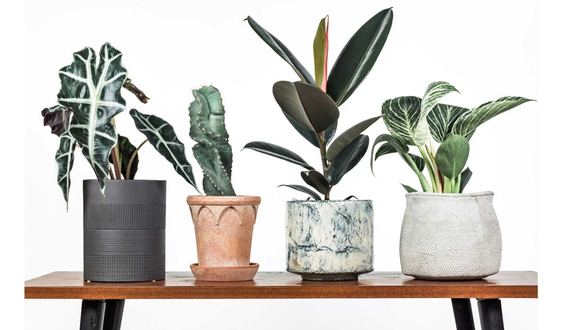 These are the best house plants for enlivening your home and boosting your health