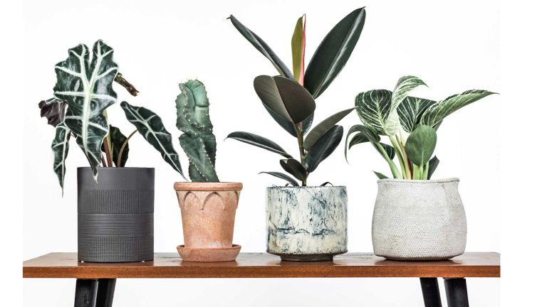 Leaf Envy - best house plants