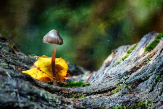 magic mushroom, mushroom, shroom