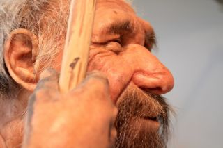 a reconstruction of a prehistoric man, Neanderthal