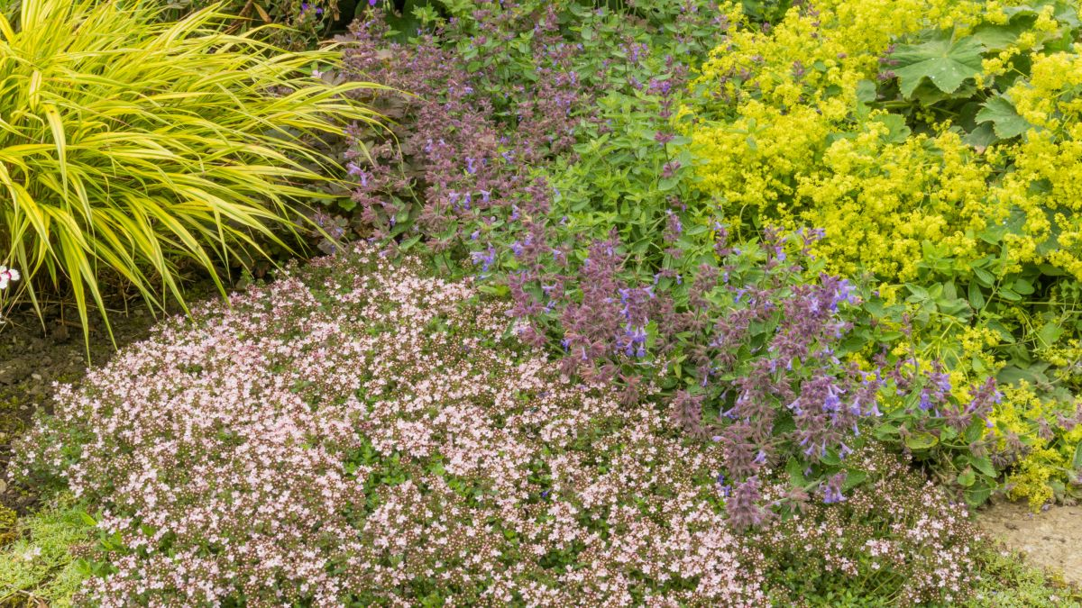 Best low maintenance ground cover plants: 11 no-fuss choices for your plot