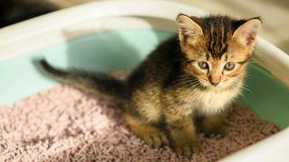 Kitten sitting in litter box on top of pellets, one of the best cat litter alternatives