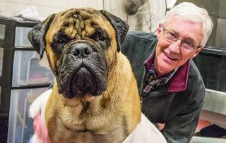 Gorgeous bull mastiff Toby, dubbed the King of Slobber, causes a rumpus this week with his epic dribbling and bad 'table' manners