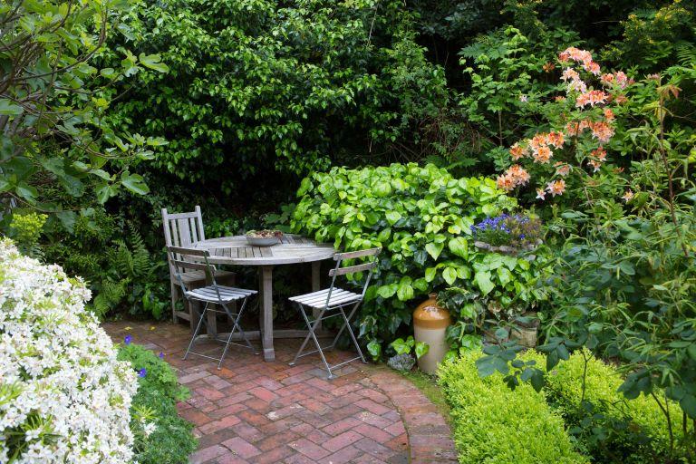 budget gardening ideas