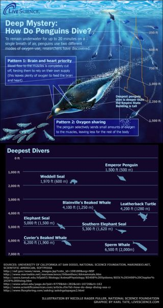 the ocean's deepest diving animals, including penguins and seals.