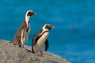 Netflix nature: Penguin Town.