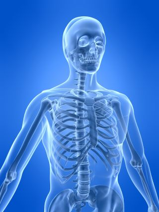 A 3D illustration of the human skeletal system.