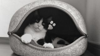 How to clean a cat bed - grey bed with black and white cat inside