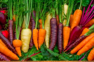 Carrots developed vibrant colors when they were domesticated.