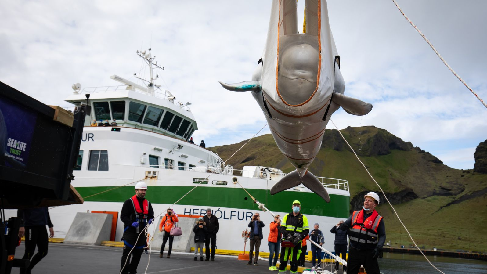 2 veľryby v zajatí nakoniec prepustili, more ucítili po 10 rokoch