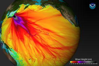 Japan tsunami wave heights
