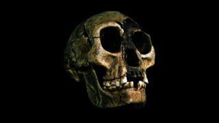 The remains of an individual Homo floresiensis were discovered in 2003 in the Liang Bua cave on the island of Flores.