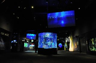 CASE STUDY: VANCOUVER AQUARIUM PUSHES BOUNDARIES WITH CUTTING-EDGE VISITOR EXPERIENCE