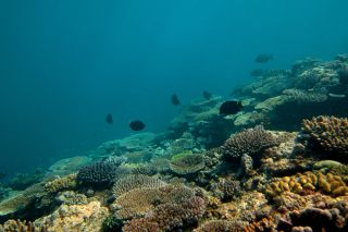 great barrier reef, health, damage, changes
