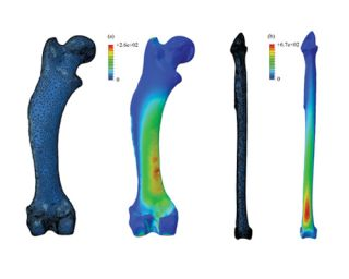 stresses placed on curved animal bones