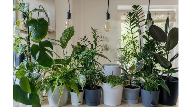 Best Indoor Plants - Best Air Purifying Indoor Plants - Unsplash Vadim Kaipov