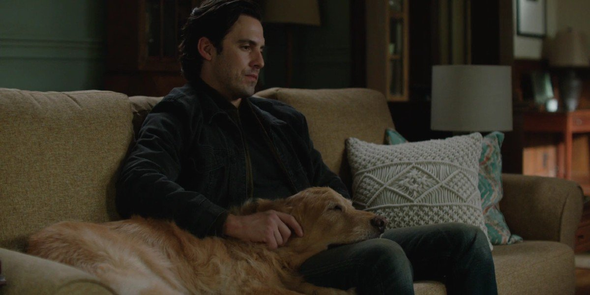 Milo Ventimiglia and the dog Enzo in the Art of Racing in the Rain