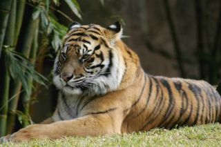 Exotic Pets Are Dangerous to Health | Live Science