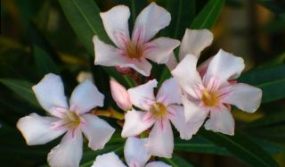 What S The Difference Between Annual And Perennial Flowers Live