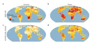 Figures A and B show the loss of animals and plants, respectively, by 2080, if nothing is done to reduce emissions. Black areas show a nearly 100% loss of species richness. Figures C and D show reduced losses with mitigation, if emissions peak in 2016 and
