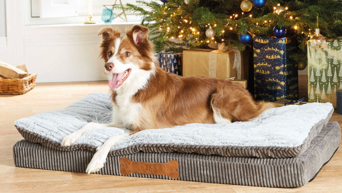 Aldi Christmas pet gifts are making us feel furry festive...
