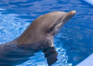 dolphin, healing, regenerative medicine, stem cells, wound, infection, antibiotics, medicine,