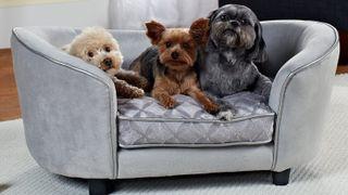 best luxury dog beds