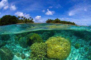 coral reef near marshall islands