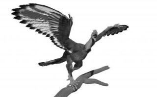 an illustration of the plumage of archaeopteryx