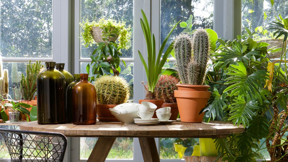 6 of the BIGGEST indoor plant mistakes