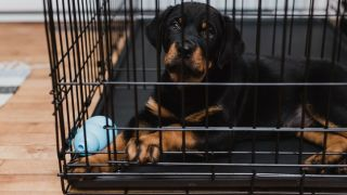 A tan and black dog in the best dog crate