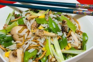 Insect stir fry
