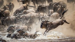 Stunning wildebeest image wins Nature in Action Photography Competition
