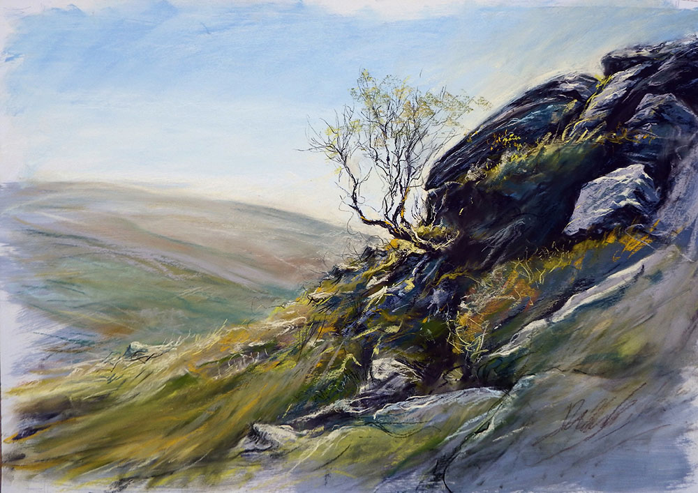 A hillside scene with a tree clinging to rocks