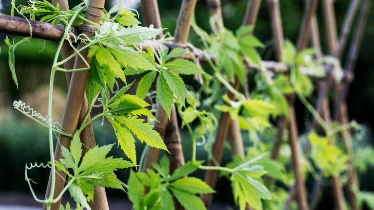 gardener scott vertical garden tips – close-up of vertical garden