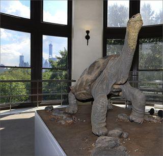lonesome George, tortoises, pinta island tortoise subspecies, endangered species