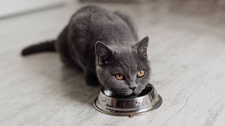 how to stop cat eating too fast